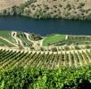 Viticultura-P1070389