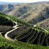 Viticultura-P1070406