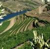 Viticultura-P1070415