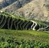 Viticultura-P1070449