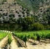 Viticultura-P1160673