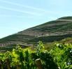 Viticultura-P1160675