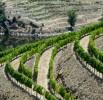 Viticultura-P1160775